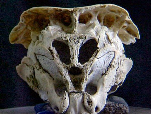 alien-skull-2