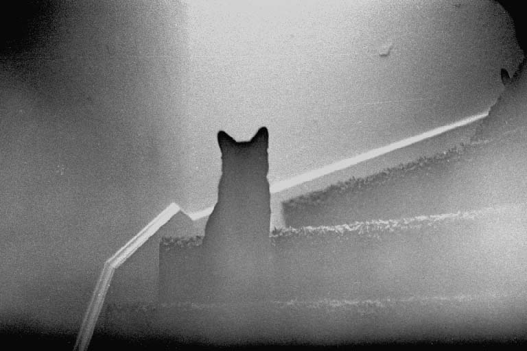 Do Cats And Dogs See Ghosts