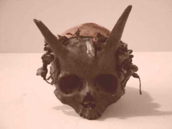 horned-skulls