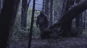 Bigfoot in forest