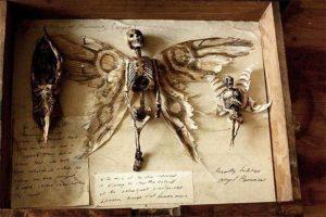 Real elf skeleton