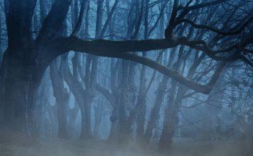 Mystic dark forest