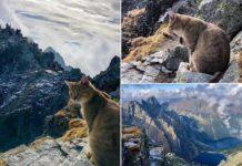 Cat on mountain