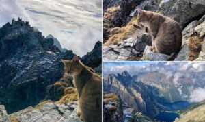 Cat on mountain
