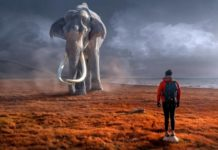 Dreams elephant