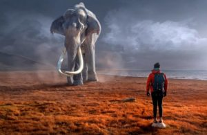 Dreams elephant