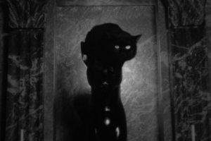 Phantom black cat