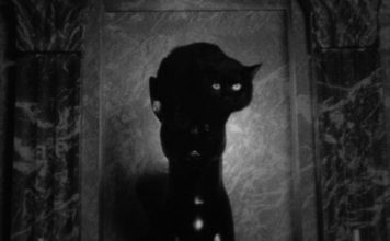 Phantom black cat
