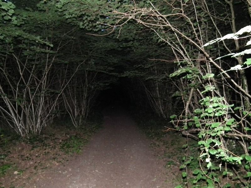 Clapham Wood in West Sussex, England is associated with many strange events and sightings.