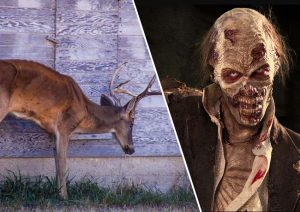 Deer zombie