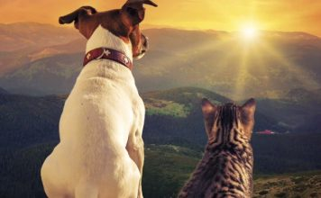 Dog cat psychic