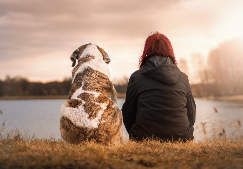 Pets, animal