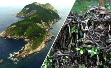 Snake island