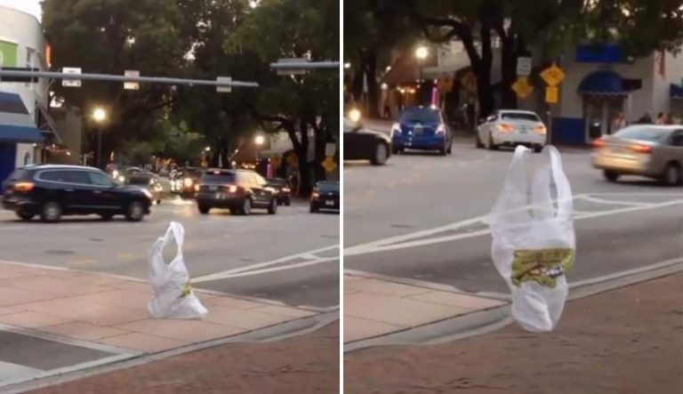 Plastic bag alive