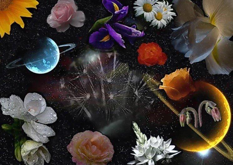 Astro Sun flowers