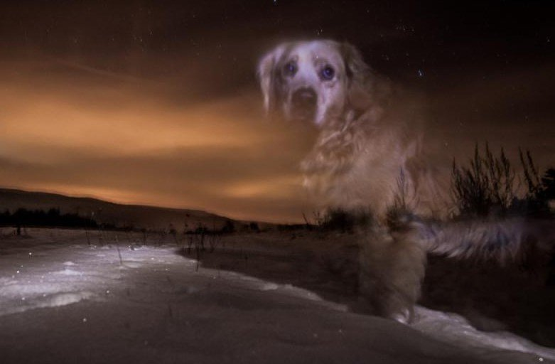 Fantôme de chien