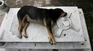 Capitan loyal dog