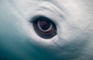 Dolphin eye
