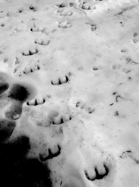 Devil's footprints