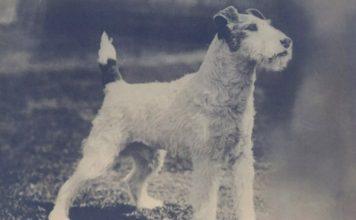 Foxy ghost dog