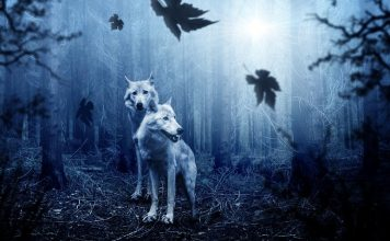 Psychic animals