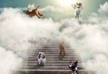 Animals heaven