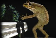 loveland frog