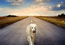 Psi-trailing road dog