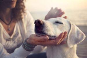 Animal human telepathy