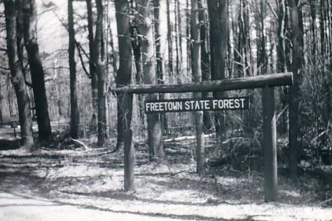 Freetown State Forest: