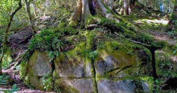 Kaimanawa Wall