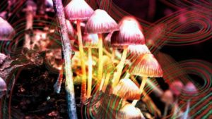 humans descended from mushrooms