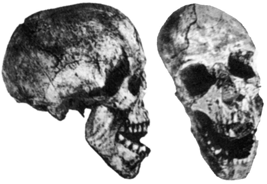 skull discovered by Hans Reck