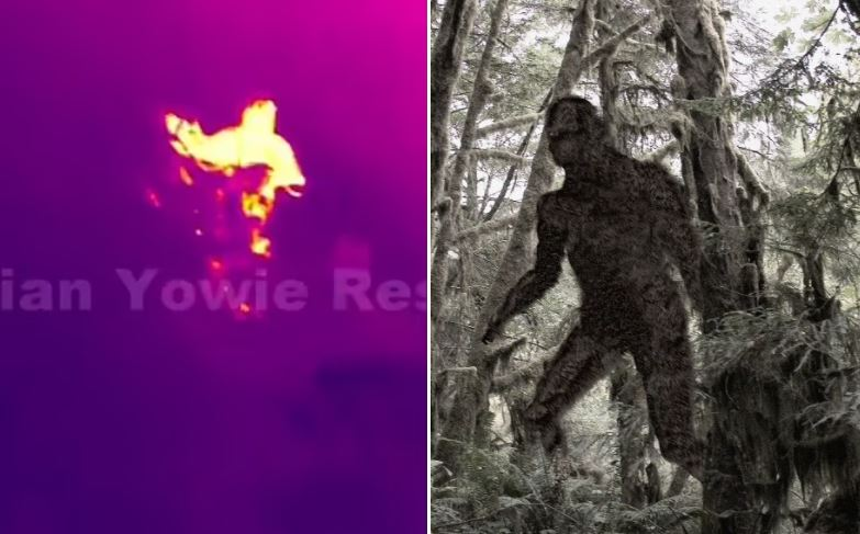 """""""Yowie Hunters"""" published thermal footage of massive humanoids in the forest"""